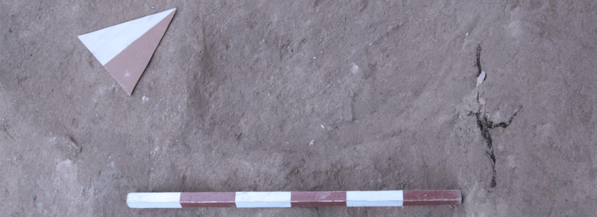 Società Cooperativa Archeologica ARA
